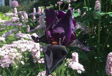 Plant Lovers Garden